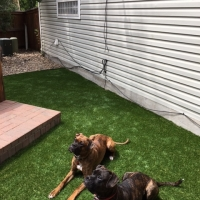 Turf Around Hot Tub with Dogs