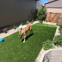 2021 Small Turf Backyard With Dogs